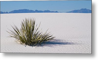 Metal Print featuring the photograph Dune Plant by Marie Leslie