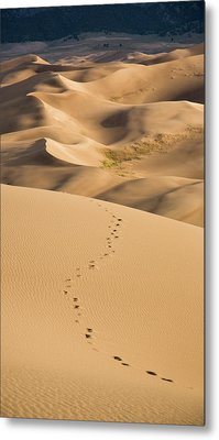 Dunefield Footprints Metal Print by Adam Pender