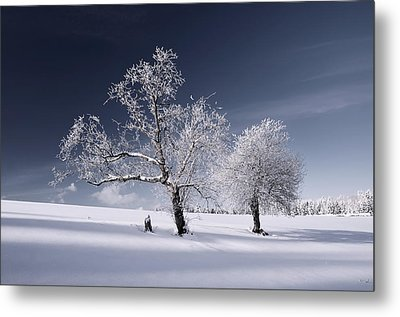 Metal Print featuring the photograph Duo White by Philippe Sainte-Laudy