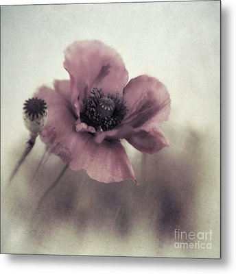 Dusty Pink Poppy Metal Print by Priska Wettstein