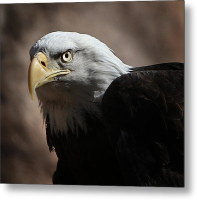 Metal Print featuring the photograph Eagle Eyed by Marie Leslie