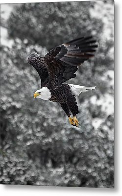 Metal Print featuring the photograph Eagle In Flight by Britt Runyon