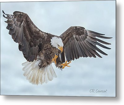 Eagle In The Clouds Metal Print by CR Courson