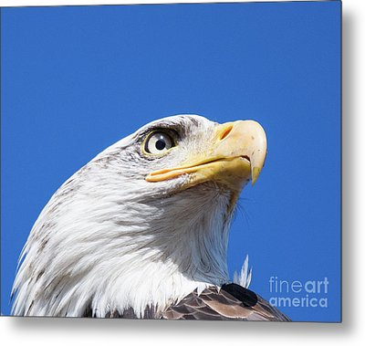 Metal Print featuring the photograph Eagle by Jim  Hatch