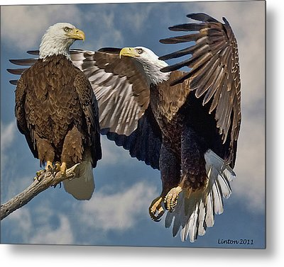 Eagle Pair 3 Metal Print