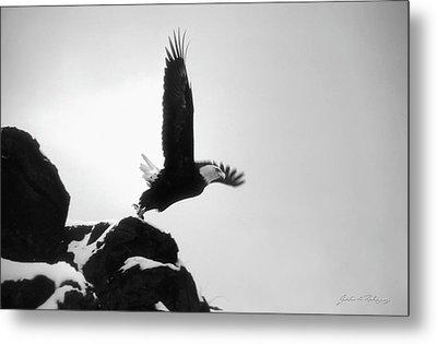 Eagle Takeoff At Adak, Alaska Metal Print