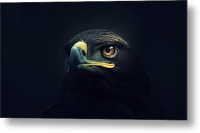 Eagle Metal Print by Zoltan Toth