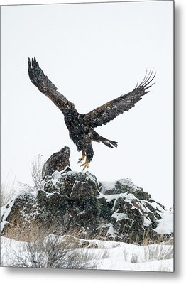Eagles In The Storm Metal Print by Mike Dawson