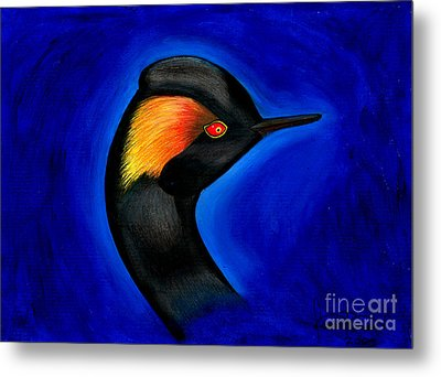 Eared Grebe Duck Metal Print by Fanny Diaz