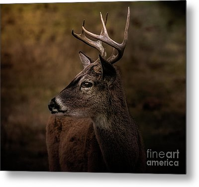 Metal Print featuring the photograph Early Buck by Robert Frederick