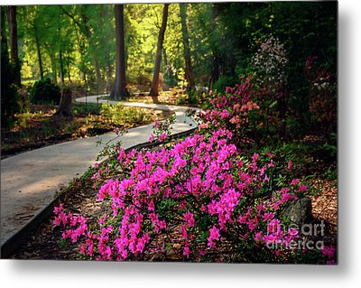 Early Morning In Honor Heights Park Metal Print