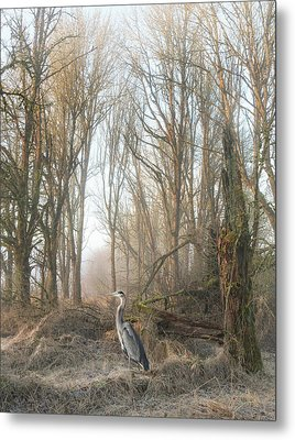 Metal Print featuring the photograph Early Morning In The Backwoods by Angie Vogel