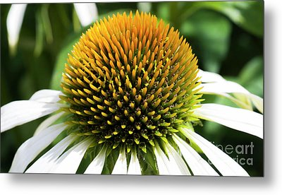 Metal Print featuring the photograph Echinacea - Head And Shoulders by Wendy Wilton