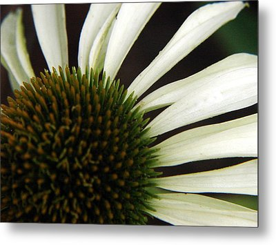 Echinacea Metal Print by Priscilla Richardson