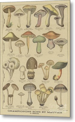 Edible And Poisonous Mushrooms Metal Print by French School
