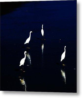 Egret Reflections Metal Print by David Lane