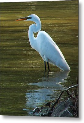 Metal Print featuring the photograph Egret Resting by Kathleen Stephens