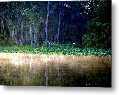 Egrets On A Fence Metal Print