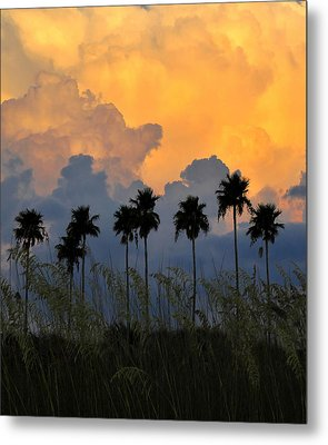 Eight Palms Metal Print by David Lee Thompson