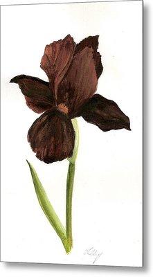 elderly Iris Metal Print by Susan Tilley