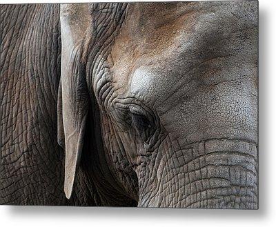 Elephant Eye Metal Print by Lorraine Devon Wilke