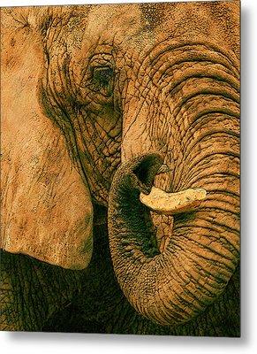 Elephant Study In Texture Metal Print