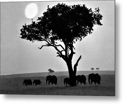 Elephants Under A Tree Metal Print