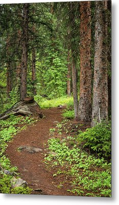 Elk Camp Trail Metal Print by Adam Pender