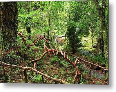 Enchanted Forest Metal Print by Aidan Moran