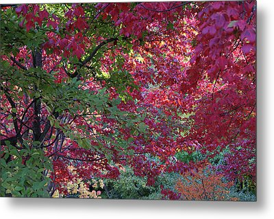 Enchanted Forest Metal Print by Doris Potter