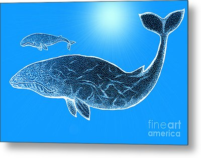 Endangered Gray Whales Metal Print by Nick Gustafson