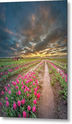 Metal Print featuring the photograph Endless Tulip Field by William Lee