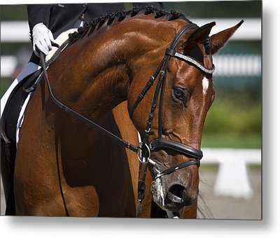 Metal Print featuring the photograph Equestrian At Work D4913 by Wes and Dotty Weber