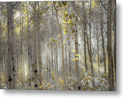 Ethereal Autumn Metal Print by Leland D Howard