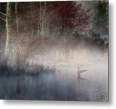 Metal Print featuring the photograph Ethereal Goose by Bill Wakeley