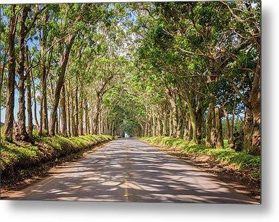 Eucalyptus Tree Tunnel - Kauai Hawaii Metal Print