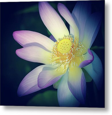 Metal Print featuring the photograph Evening Lotus  by Julie Palencia