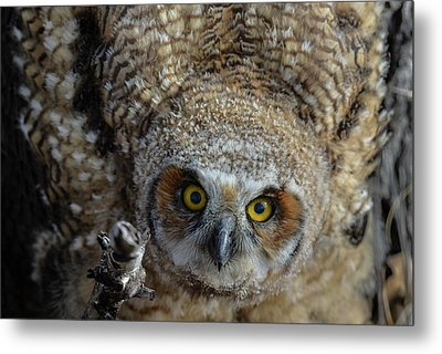 Eyes Into The Soul Metal Print