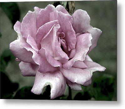 Faded Beauty Rose 0226 H_2 Metal Print