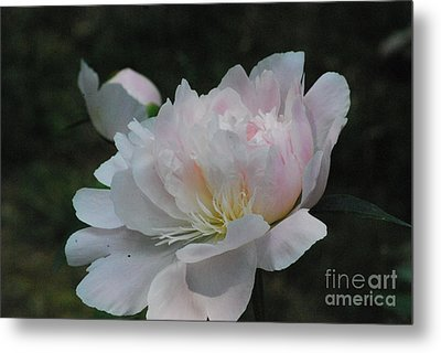 Fairy Tale Bloom Metal Print by Sharen Duffing