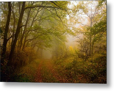 Fairy Wood Metal Print by Evgeni Dinev
