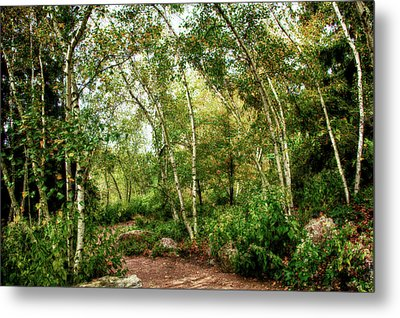 Metal Print featuring the photograph Fairy Woodlands by Sheryl Thomas