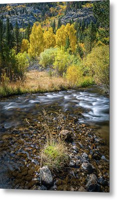 Metal Print featuring the photograph Fall Colors At South Fork Bishop Creek by Alexander Kunz