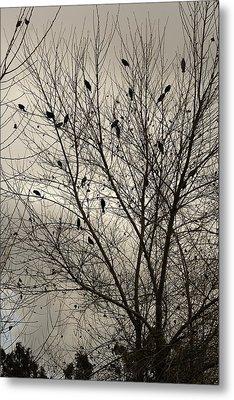 Fall. Evening.blackbirds. Metal Print by Viktor Savchenko