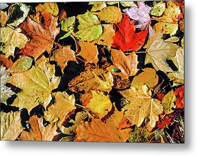 Fall Foliage On Water Metal Print by Morris Finkelstein