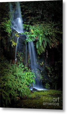 Fall In Eden Metal Print by Carlos Caetano