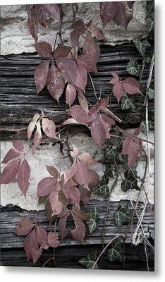 Fall Ivy Metal Print