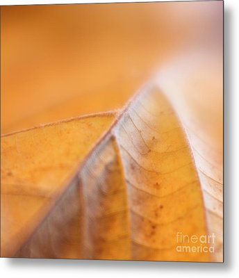 Metal Print featuring the photograph Fall Leaf by Elena Nosyreva
