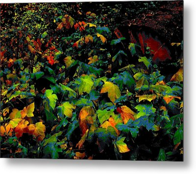 Fall Thimbleberry Metal Print by Anne Havard