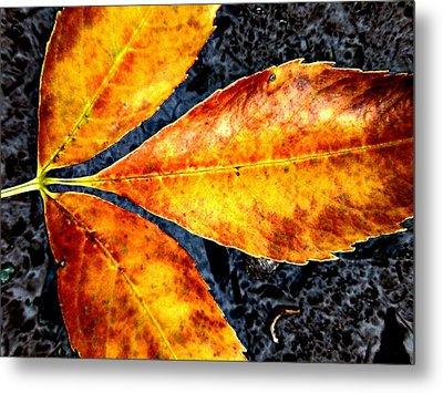 Fallen Leaves Metal Print by Beth Akerman